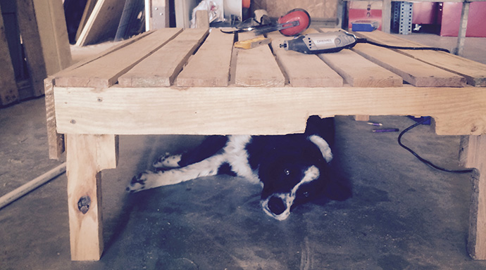 dog under work bench